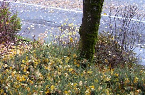 Autumn leaves 2 (2)