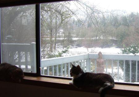 Cats & snow 5 (2)