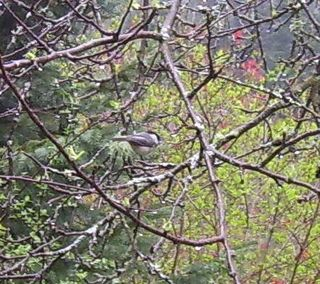 Bird in tree 1 (2)