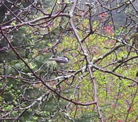 Bird in tree 1 (2)