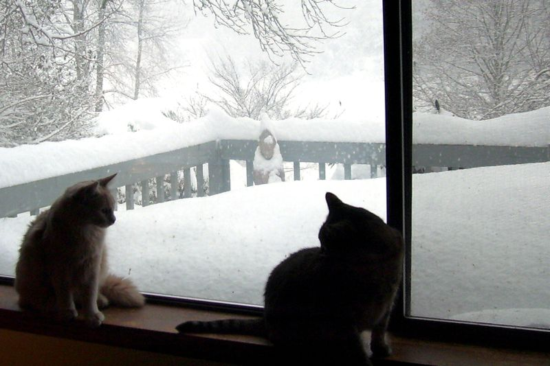 Cats & snow 7 (6)