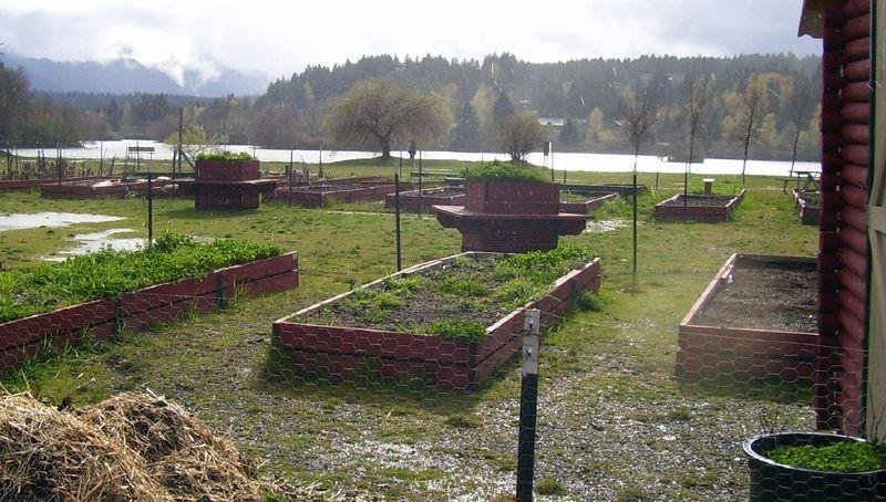Community garden Gorge spring 6 (4)