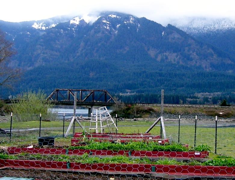 Community garden Gorge spring 9 (2)
