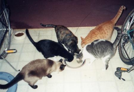 5_cats