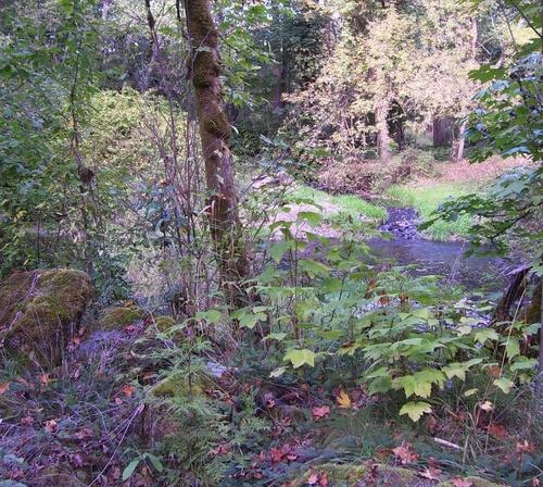 Autumn_creek_3