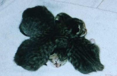 Kitten_pile_1