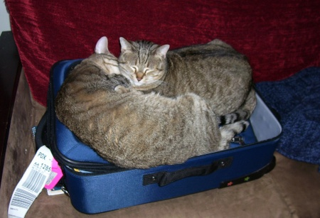 Luggage_cats