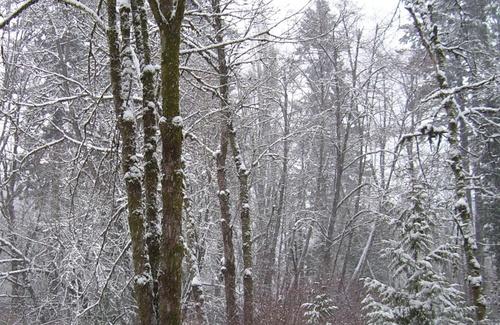 Snowy_creek_10