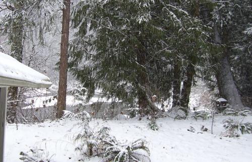 Snowy_creek_3
