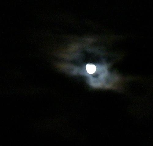 Wolf_moon_1